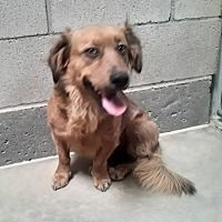 Palmdale Ca Dachshund Meet Keish A Pet For Adoption In 2020 Pet Adoption Dachshund Adoption Pets
