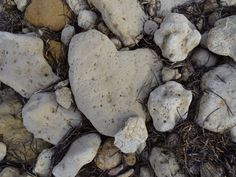 Hearts in nature ...heart rock on the beach.