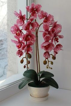 growing orchids at home Orchids Garden, Orchid Plants, Flowers Garden, Exotic Flowers, Beautiful Flowers, Orchid Flower Arrangements, Orquideas Cymbidium, Artificial Orchids, Orchid Care