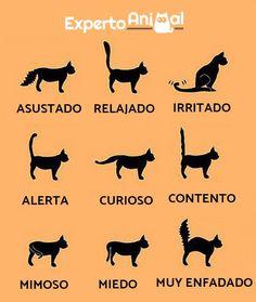 El lenguaje corporal de los gatos - Ejemplos y imágenes - ExpertoAnimal