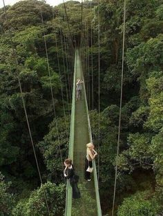 Canopy Walkway above the Monterverde Rainforest, Costa Rica