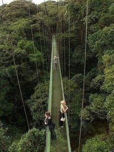 Canopy Walkway above the Monterverde Rainforest, Costa Rica