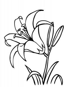 Daylily Flower coloring page