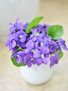 Picked some sweet little violets from the garden