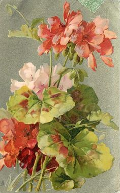 two red & one pink geraniums, prominent leaves - Catherine Klein - watercolor and gouache