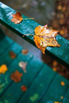 "Beautiful image of ""fall"" -- leaves, rain, turquoise Autumn Day, Autumn Leaves, Fallen Leaves, Dark Autumn, Happy Autumn, Autumn Morning, Fall Days, Hello Autumn, Favorite Color"