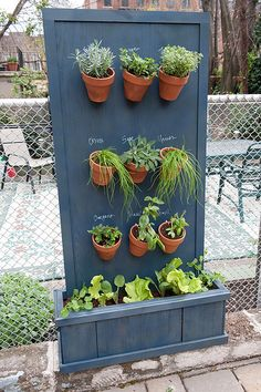 Vertical Herb Garden-In the dried Western US states, pots dry out quickly.  A better set-up is to have the drip lines through holes drilled in the wall that the lines drip in the pots on a daily basis in hot weather, and if over 100 degrees, twice a day. If painted with a washable paint, herb labeling in chalk is a terrific idea if you want to change out pots with different herbs.