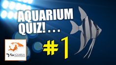 Aquarium quiz tropische zoetwater vissen Aquarium, Youtube, Movie Posters, Movies, Films, Film, Movie, Aquarius, Movie Quotes