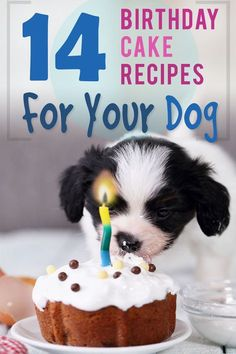 Pupcakes and Birthday Cake Recipes for your special dog or puppy. Make homemade and healthy treats this year to properly celebrate with your furry friend :) # Dogs cake 14 Dog Birthday Cake & Cupcake Homemade Recipes Cake Dog, Puppy Cake, Dog Cakes, Puppy Treats, Diy Dog Treats, Healthy Dog Treats, Birthday Treats For Dogs, Dog Cake Recipes, Dog Biscuit Recipes