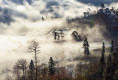 雾挠梯田 by 249029692  china 中国 旅行 风光 自然 摄影 风景 旅游 元阳 雾挠梯田 249029692