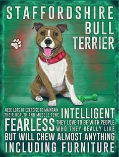 Terriers Staffordshire Bull Terrier Metal Plaque Dog Sign Pet Wall X 20 Cm - Pitbull Terrier, Chien Bull Terrier, Pitbull Pups, Terrier Dogs, Staffordshire Bull Terriers, American Staffordshire, American Pit Bull Terrier, Pitbull Facts, Pet Dogs