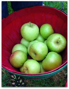 Tips For Picking Apples with Kids