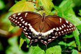 the world of Beautiful Butterflies & Moths