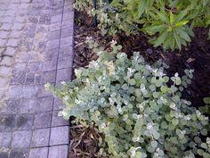 Quarry Double Cobble in Raven. Somerset West, Best Web, Raven, Plants, Design, Ravens, Crows, Plant