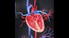 Wie entsteht ein Herzinfarkt?Der Herzmuskel wird von den Herzkranzgefäßen (Koronararterien) mit Blut und Sauerstoff versorgt. Bei einem Infarkt verstopft ein Blutgerinnsel ein Gefäß - das Blut kann nicht mehr zirkulieren. Gelingt es nicht innerhalb von wenigen Stunden, das verschlossene Gefäß wieder zu eröffnen, stirbt der von dem Gefäß versorgte Herzmuskelteil ab.