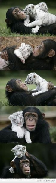 IN LOOOOOOOOOVE!!! how could anyone every hurt these beautiful animals.