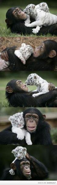 IN LOOOOOOOOOVE!!! how could anyone every hurt these beautiful animals.