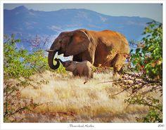 Mother & Calf,                        Damaraland Namibia