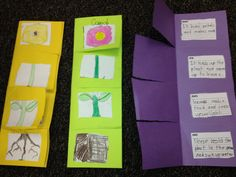 parts of flower foldable