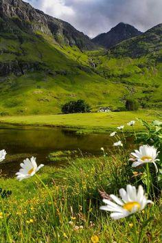 Wild flowers at Glencoe, Scotland