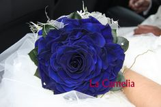 Rosmelia Azul