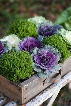 dining table - ornamental cabbage, artichokes, cotton, flowers in wooden crate This will work perfectly in with my theme for Moms party C.W.