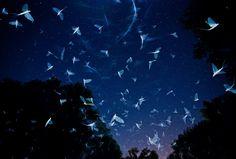 Mayflies in flight