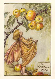 The CrabApple Fairy-Cicely Mary Barker