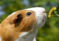 Ingyen letölthető háttérképek! Minden idők legcukibb állatai | femina.hu