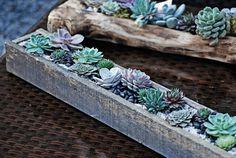 Centro Garden Succulent Box