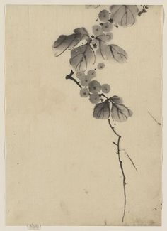 Title: Branch with leaves and berries. Related Names: Katsushika, Hokusai, 1760-1849. Date Published: Between 1830 and 1850. Medium: 1 drawing on thin handmade paper: ink wash.