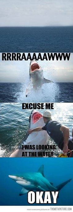 Funny pictures about Excuse me shark. Oh, and cool pics about Excuse me shark. Also, Excuse me shark. Cute Animal Memes, Animal Jokes, Cute Funny Animals, Funny Animal Pictures, Funny Photos, Best Funny Pictures, Funny Cats, Pictures Of Sharks, Shark Attack Pictures