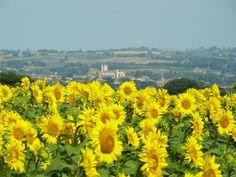 Condom: Condom in sunflowers - France-Voyage.com