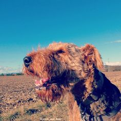 A blue sky sunshine  and a human  willing to bribe you with treats  what else do you need?