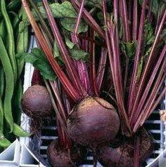 Cékla Gyógyító Hatása | Zöldségek - Gyümölcsök - Fűszerek - Magvak Gyógyító Hatása