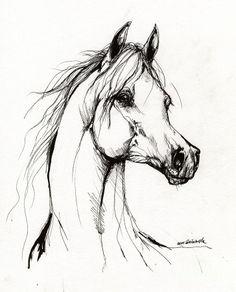 Arabian Horse Drawing