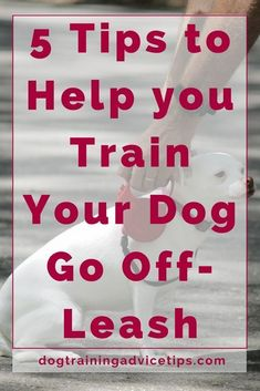 5 Tips to Help Your Dog Go Off-Leash - Dog Training Advice Tips - Dog Obedience Training Tips - Hunde Off Leash Dog Training, Puppy Training Tips, Training Your Dog, Potty Training, Training Collar, Crate Training, Puppy Obedience Training, Training Kit, Agility Training