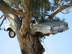 Nesting Falcon.......