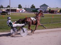The division of the Doc Mairs Memorial Trot at the 2012 Wayne County Fair was won by Lookslikefire driven by Charlie Myrick. Race Horses, Horse Racing, Wayne County, Harness Racing, Trotter, County Fair, Division, Ohio, American
