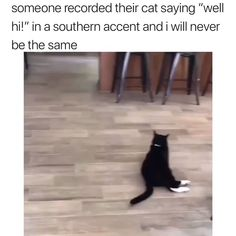 I can't stop watching this… 😳 - Katzenrassen Beautiful Cats Funny Animal Jokes, Cute Funny Animals, Funny Animal Pictures, Funny Cute, Cute Cats, Animal Humour, Funny Shit, 9gag Funny, Really Funny Memes