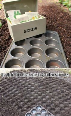 Use Muffin Tin to Create Perfectly Spaced Holes for Seeds