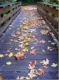 A late Autumn stroll through Ashland's Lithia Park Beautiful Places In The World, The Real World, Ashland Oregon, Windermere Real Estate, Late Autumn, University Of Oregon, Good Neighbor, Land For Sale, Nocturne