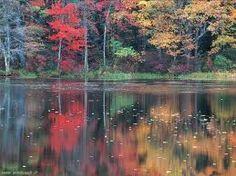 Senza morire...  dopo molte notti di viaggio in un tramonto d'autunno (Matsuo Basho)