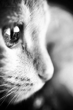 Shared by Smileyandthesun. Find images and videos about black and white, vintage… Shared by Smileyandthesun. Find images and videos about black and white, vintage and [. Amazing Animals, Cute Animals, Super Cat, Photo Chat, Cat Photography, Nature Animals, Beautiful Cats, Pet Accessories, Cat Breeds