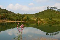 Baijia Tea garden