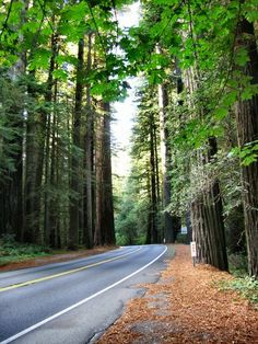 Oregon - driving through the woods near the redwood forests in southern Oregon...been here on the Harleys.