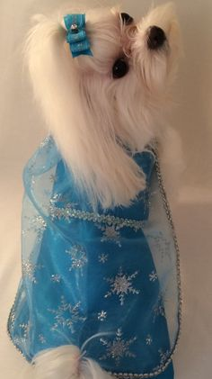 Queen Elsa dog costume Elsa birthday party dog by rufflerunway Belle Halloween Costumes, Cute Dog Costumes, Pet Fashion, Animal Fashion, Frozen Dog, Elsa Frozen, Elsa Birthday Party, Malteser, Maltese Dogs