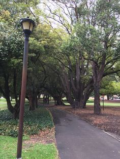 Beautiful canopy of trees : canopy hyde park - memphite.com