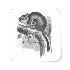 black and white sugar glider illustration - Google Search