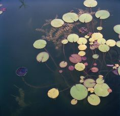 Lily pads by Katina Houvouras